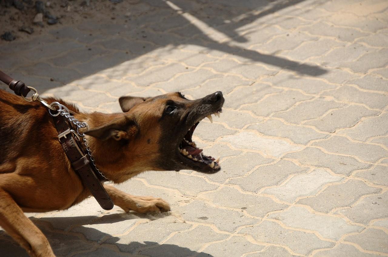 cane-che-morde