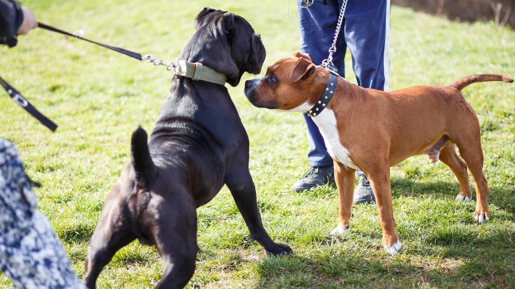 lesioni-cani